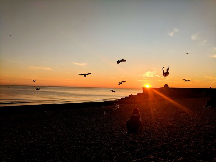 Sunset Flying Bird Large Group Of Animals Animals In The Wild Flock Of Birds Sun Animal Wildlife Silhouette Sea Animal Themes Beach Mid-air Nature Beauty In Nature Sky Outdoors Sunlight Horizon Over Water No People Brighton Beach Brighton EyeEm Selects Brighton Seafront Close-up