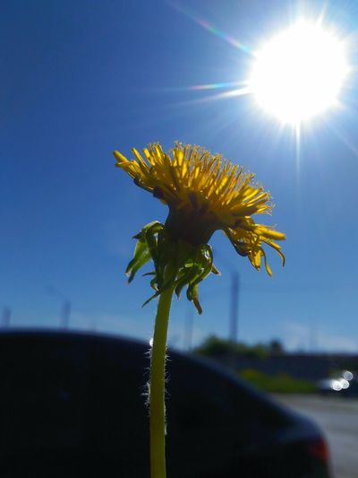 Close-up of flowering plant against bright sun
