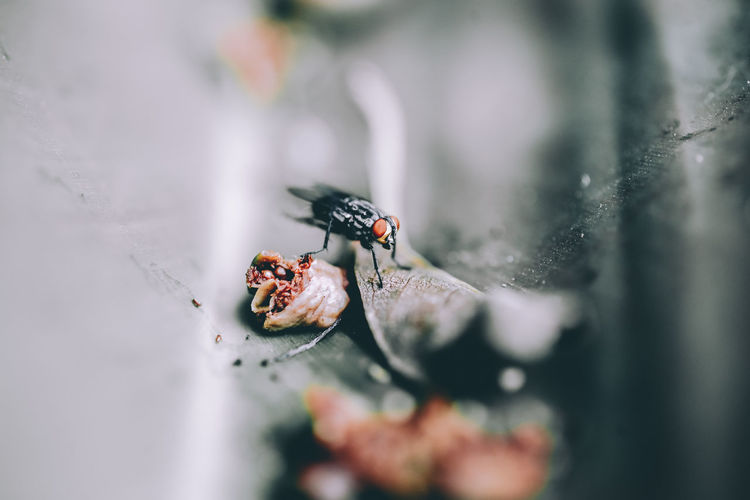 Insect Invertebrate Animal Wildlife Animal Themes Animals In The Wild Animal Selective Focus Close-up One Animal Day Nature No People Leaf Outdoors Plant Part Plant Zoology Fly Small