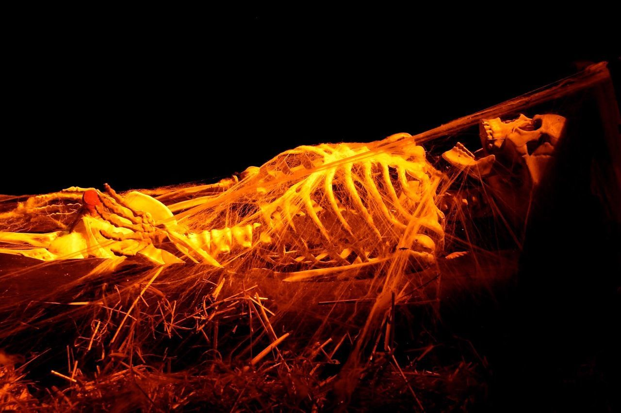Close-up of human skeleton against black background