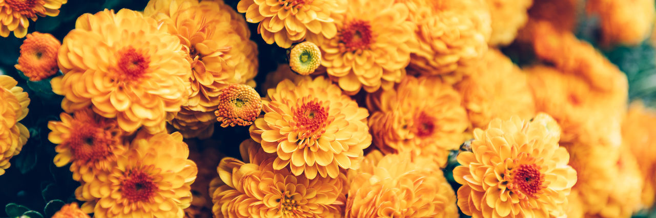 Close-up of yellow flowering plants at market