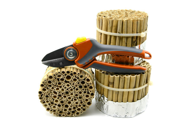 building an insect hotel with reed and bamboo sticks with garden shears on white isolated background. wild bee protection Insect Hotel Sticks And Twigs Bamboo Close-up Cut Out Gardentool Insect Shelter Reed Reeds Shear Shears Sticks Studio Shot Tinkering White Background
