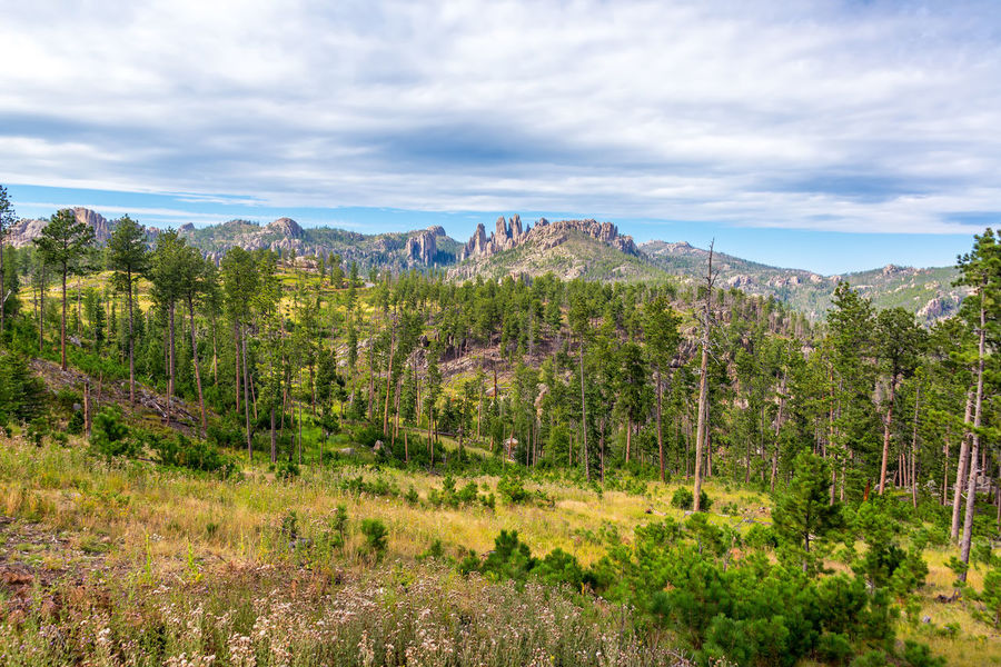 Custer State Park landscape with the Cathedral Spires rock formation rising in the background Beauty In Nature Black Hills Blue Custer Custer State Park Forest Green Green Color Landscape Nature No People Park Sky South Dakota Tourism Travel Travel Destinations Tree Trees USA