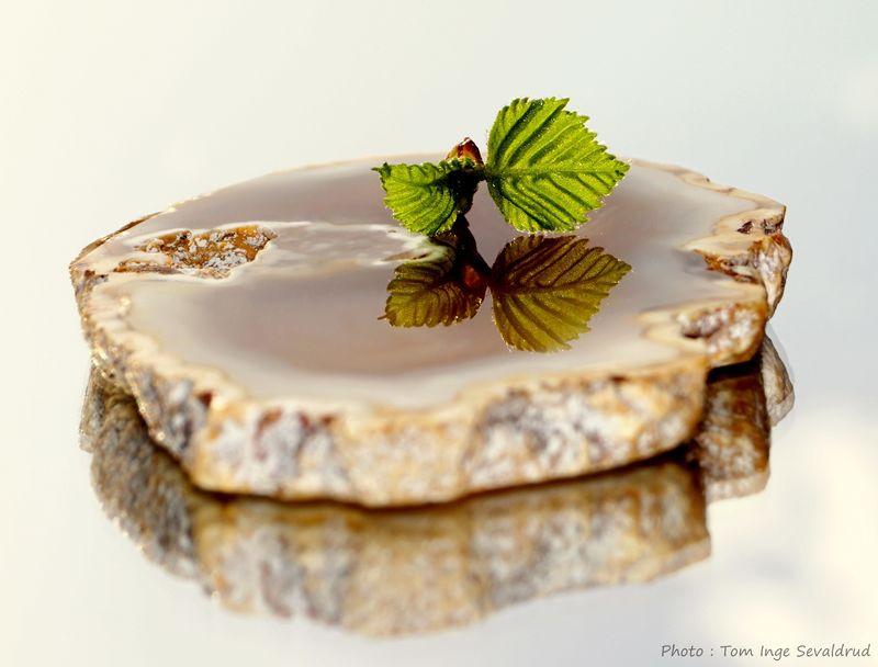 Leaf Agate Photoart Creativephoto Close-up Plant No People Freshness Indoors  EyeEmNewHere