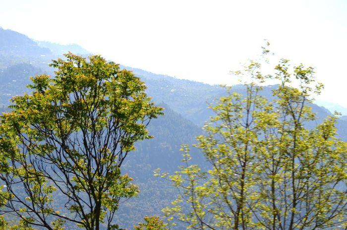 Hello World Eyeem Pakistan Pakistani Traveller Naturelover Tree_collection  Mountain_collection Beauty Of Pakistan Ajk Pakistan EyeEm Gallery