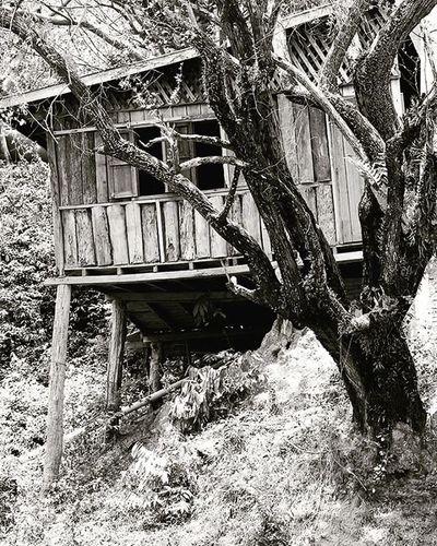 Mono Blackandwhite Bamboo Bamboohouse Woodenhouse Poverty Lifeasiseeit Namgnum Vientianeprovince Laospdr Southeastasia Johnnelson Tree