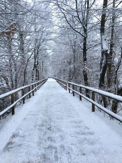 Schnee, Weg, Winter, Winter Snow Cold Temperature Railing Tree The Way Forward Nature Weather Beauty In Nature Outdoors Frozen Tranquil Scene Tranquility No People Snowing Bridge - Man Made Structure