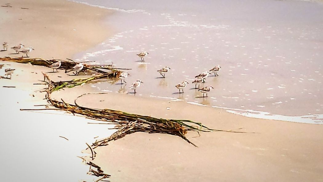 Traveling Beach Life Layers And Textures Light And Shadow Animal Photography Swimming With The Fish South Carolina Water Sand Piper Bird Photography