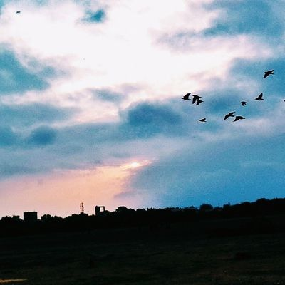 Stairway to heaven. VSCO Vscoindia 6am Pologround Birds Sunrise Clouds Nature 😊
