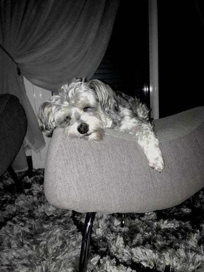 Mon amour de chien !