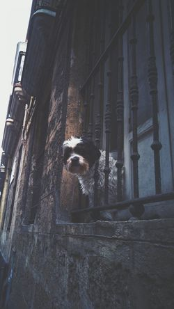 Curious doggy Dog Perro Streetphotography Pets