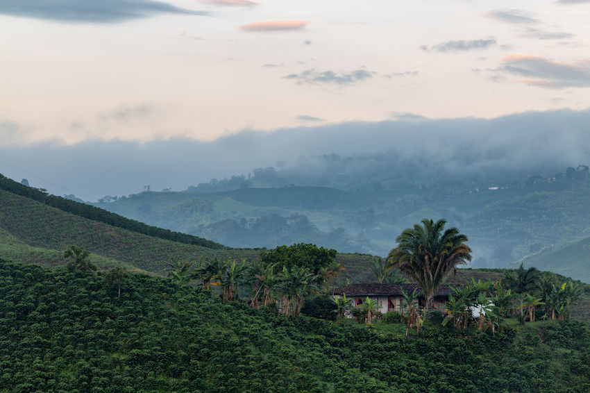 Early morning mist lifts in the coffee triangle near Manizales, Colombia. Andes Caffeine Coffee Colombia Farm Latin Manizales Nature Plant South Travel America Arabica Bean Caldas Chinchina Colombian  Drink Landscape Mountain Organic Plantation Robusta Triangle Tropical