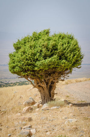 Arid Climate Beauty In Nature Day Grass Growth Landscape Nature No People Outdoors Plant Scenics Tree Water