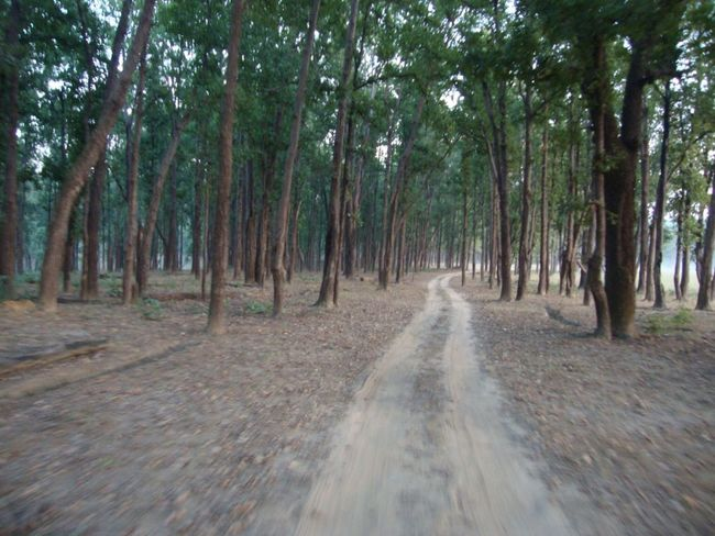 Beauty In Nature Forest Landscape Nature No People Tree