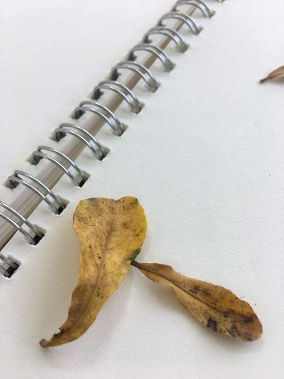 Notebook Autumn