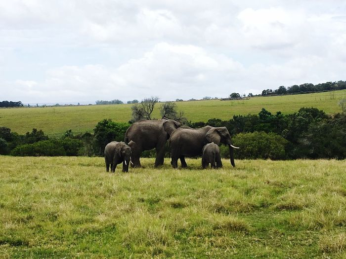 Safaritour Animal Themes Sky Landscape Nature Beauty In Nature Outdoors Scenics Rear View Tranquility Elephantbabies