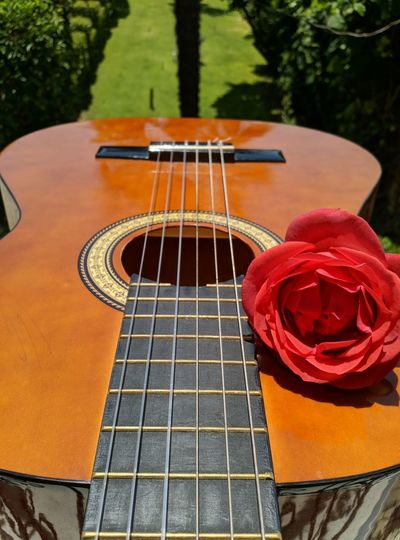 Close-up of rose with guitar