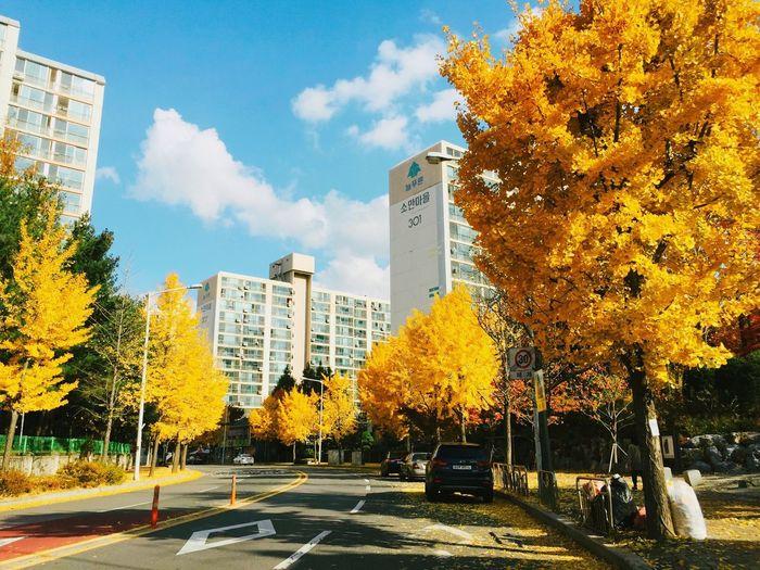 ㄱ을Autumn 秋 Korea 写真