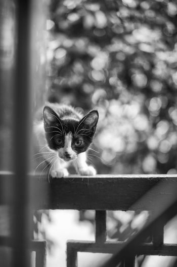Today's Hot Look On The Road Streetphotography Popular Photos Streetphoto_bw Light And Shadow Monochrome Blackandwhite Cat Black And White Streetphoto Pets Street Photography