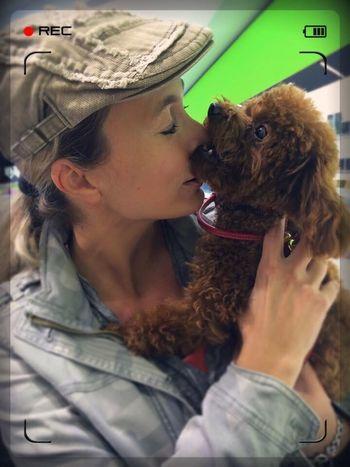 Poodle Poodletoy Pet Dog Kiss Hug Togetherness Loyalty Domestic Animals One Animal Pet Owner Indoors  Holding Fur Unconditional Love