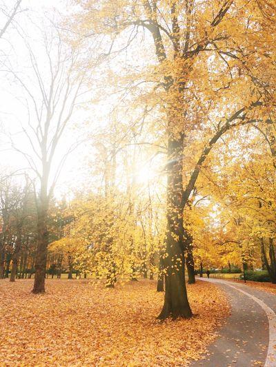 Autumn Colors Rays Chasinglight