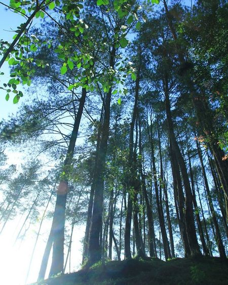 Morning World🌄 Puncaklawang Sumbar_rancak Sumbar_oke Minangrancak ExploreSumbar Pesonaindonesia INDONESIA Potret_sumbar Adventure_sumbar