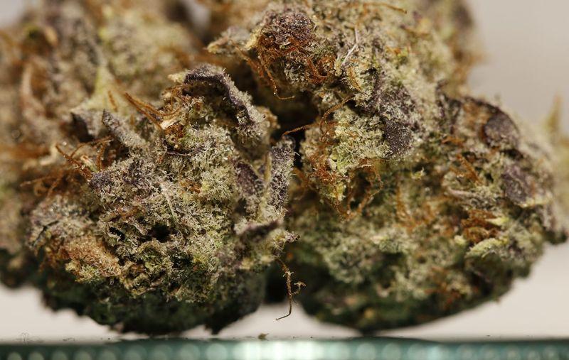 Herb Weed Space