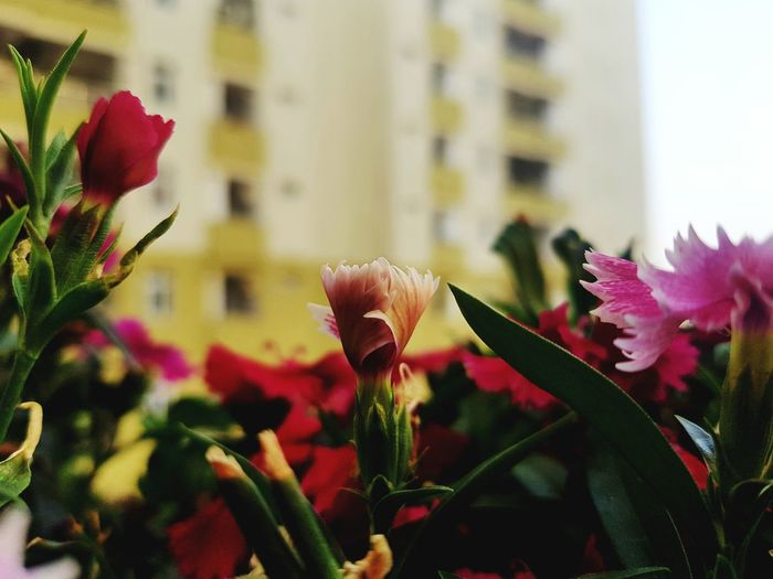 Flower Head Flower Petal Springtime Close-up Plant Building Exterior Architecture Bud EyeEmNewHere Stories From The City
