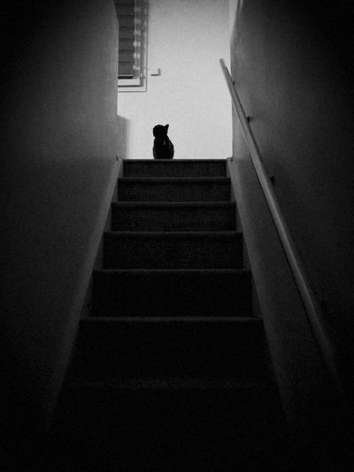 Mysterious Kitty Cat Stairways Pet Portraits