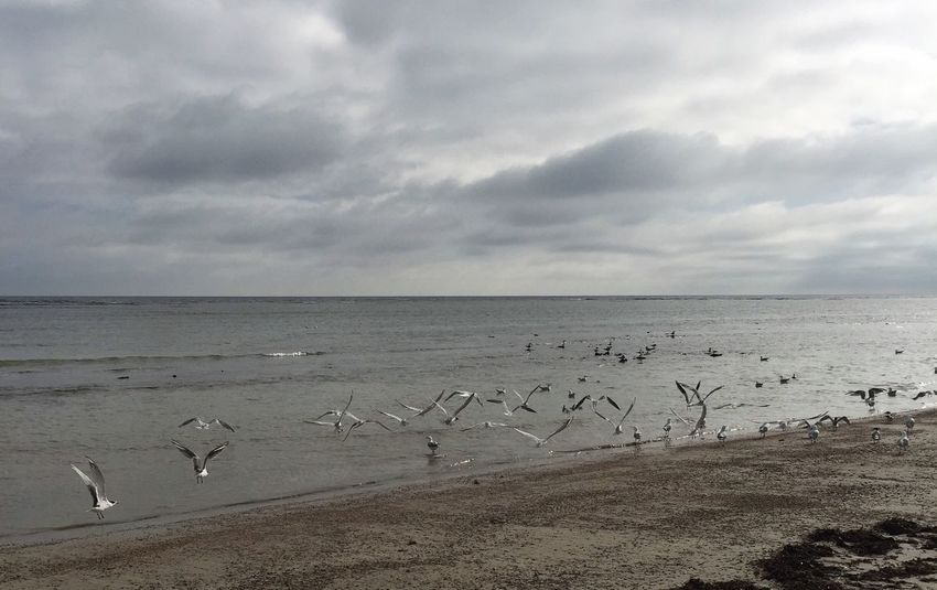 Flock Taking Flight Sea Horizon Over Water Water Large Group Of Animals Nature Bird Sky Animal Themes Animals In The Wild Beauty In Nature Beach Scenics Flock Of Birds Tranquility Cloud - Sky Tranquil Scene No People Outdoors Flying Sand Winter Beach