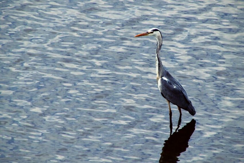 Elbe Dresden Elbe River Nature Bird Early Bird