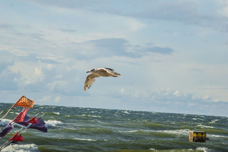 Animal Animal Themes Animal Wildlife Animals In The Wild Beauty In Nature Bird Cloud - Sky Day Flying Horizon Over Water Motion Nature No People One Animal Outdoors Sea Seagull Sky Spread Wings Vertebrate Water My Best Travel Photo