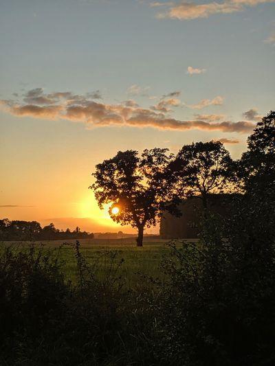 231/365 Sunset
