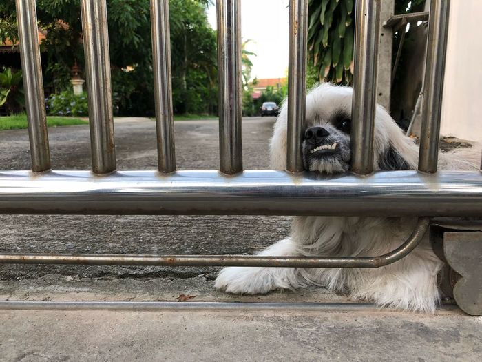 Puppy dog lay her shin on cell of gate. Home One Animal Mammal Animal Themes Animal Domestic Pets Dog Tree Canine Domestic Animals Vertebrate Day No People Plant Outdoors Relaxation Portrait Looking At Camera