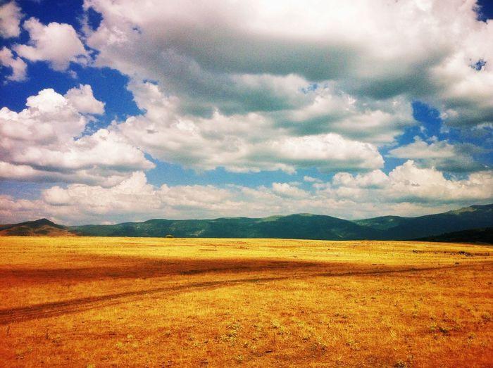 Fields of gold Landscape