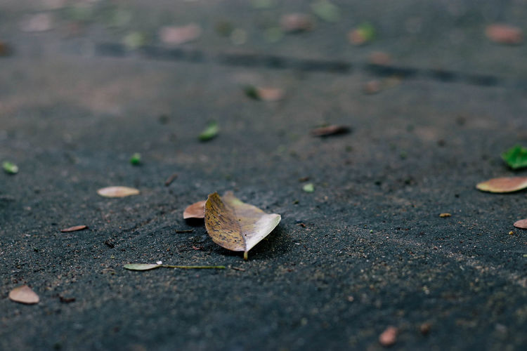 Autumn Beauty In Nature Change Close-up Day Dry Fallen Fallen Leaf Fragility Leaf Nature No People Outdoors