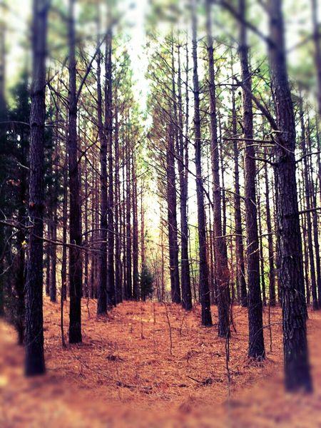EyeEm Nature Lover Nature