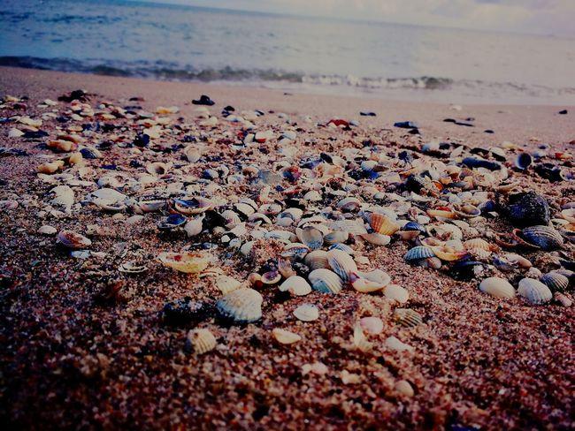 EyeEm Selects Beach Sand Sea Pebble Water Nature No People Pebble Beach Shells🐚 Shell Beach