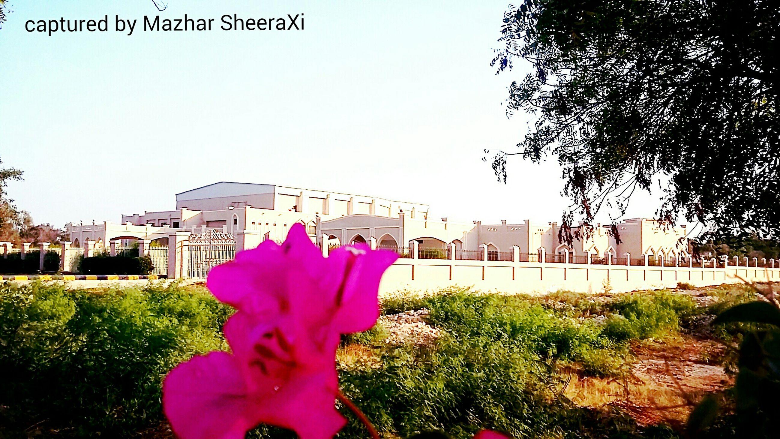 architecture, flower, built structure, building exterior, clear sky, pink color, growth, plant, city, famous place, tree, travel destinations, copy space, day, outdoors, fragility, freshness, petal, tourism, travel