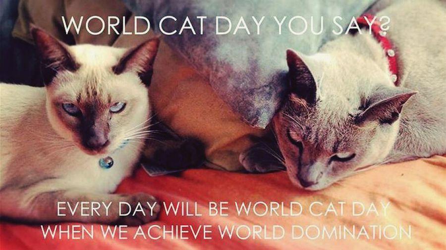 Journée Internationale Du Chat I Love Cat Cat Cat Lovers ❤️🐾
