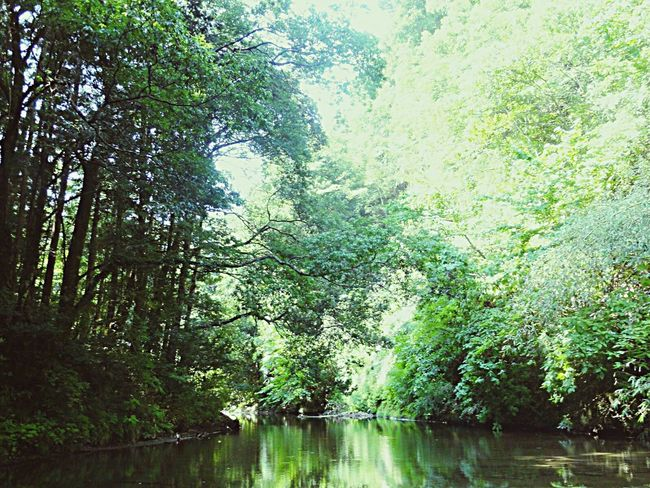Check This Out Healtheworld Healing EyeEm Nature Lover Intheriver River Green Green Green!  Greenworld Relaxing Taking Photos Enjoying Life Sunny Day Forest Traveling EyeEmcountyside