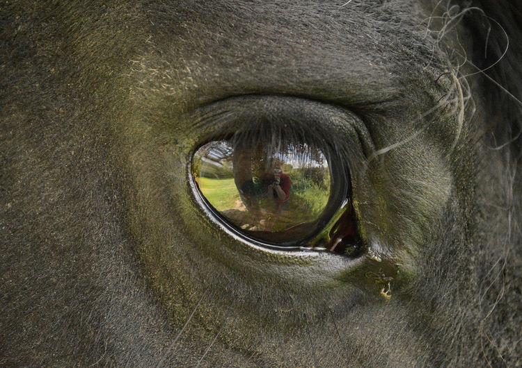 Animal Animal Themes Black Horse Close-up Creativity Eye Frisian Horse Horse One Animal Reflection Reflection_collection Side View Horse Eye Beautifull Eye Belgium Tongeren Weerspiegeling