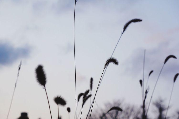 今年の撮り納め 散歩 夕方 寒い Iwate EyeEm Best Shots EyeEmBestPics