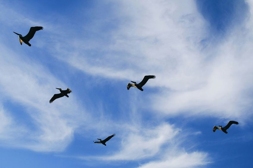 Bird's the word Simplicity Smart Simplicity Newport Beach Birds Life In Motion Clouds Hanging Out Enjoying Life RePicture Growth Southern California Losangeles Pattern Pieces Check This Out Taking Photos