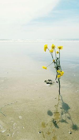 flowers beach