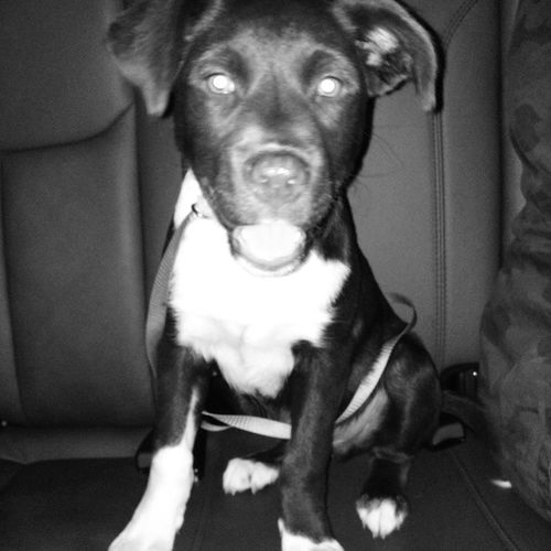 "Just a ""minor"" trip. @terenacloud_ @albertfigueroa12 @somebodyspoet Dog Puppy Blackandwhite"