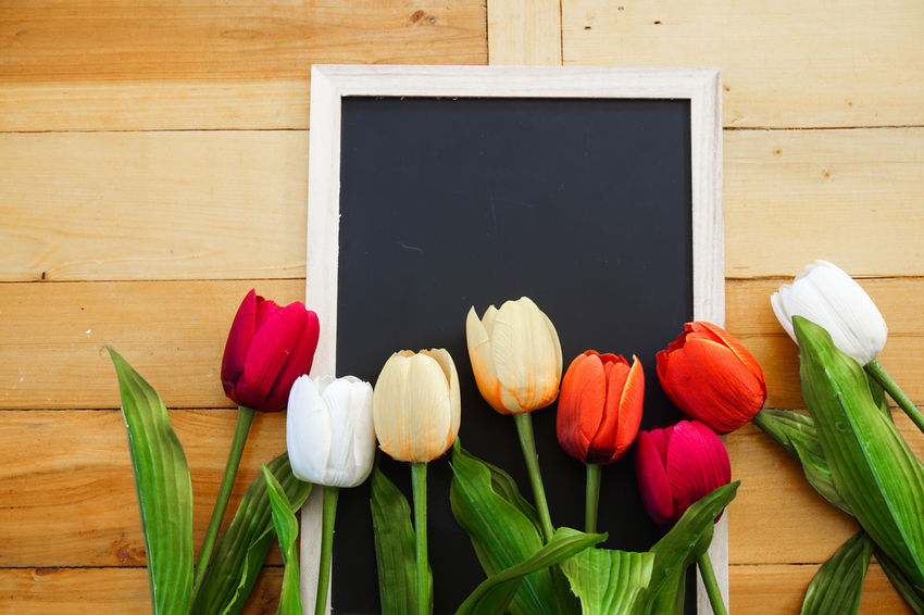 Beauty In Nature Close-up Day Flower Flower Head Fragility Freshness Indoors  Leaf Nature No People Table Tulip