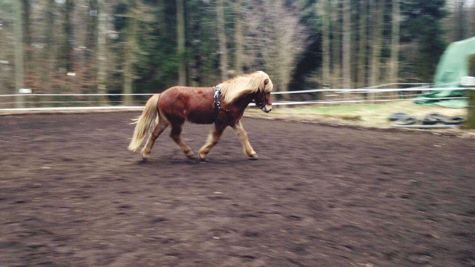 ❤️️my ️horses Pferde Pony Horses