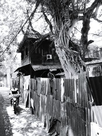 Old House. Tree Outdoors Tree Trunk Drying Day Built Structure Architecture Building Exterior Nature Landscape My Year My View Bankgkok