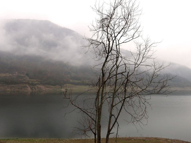 Loneliness Bare Tree Branch Foggy Idyllic Lago Del Turano Lake Landscape Mist Scenics Silence Silence Of Nature Tranquil Scene Tranquility